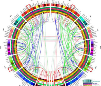 brain-networks